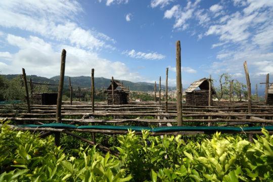 Boomgaard uitzicht sorrento italie