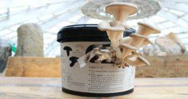 Kweek je eigen paddenstoelen