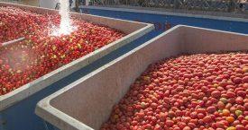 Een zoektocht naar het geheim van tomatenketchup