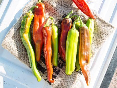 hatch-chile-crop_2000x1500