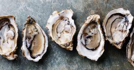 Doe mij nog een oester #2