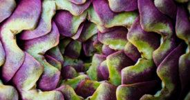 Wist jij dat deze groenten zo groeien?