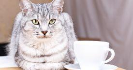 Nieuw: kattencafé in Rotterdam