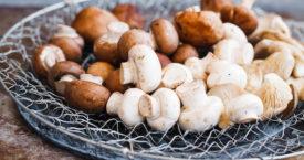 Kiezen: paddenstoelen uit de supermarkt