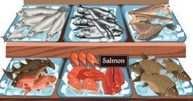 Hoe kies je een vervang-vis?