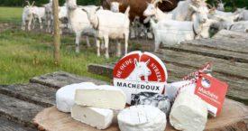 8x kaas uit het Noorden